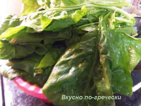 Свежий шпинат